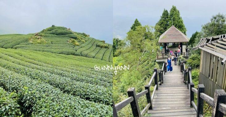 阿里山二延平步道,來回兩小時鐵漢步道,層層疊茶田好美麗 @小兔小安*旅遊札記