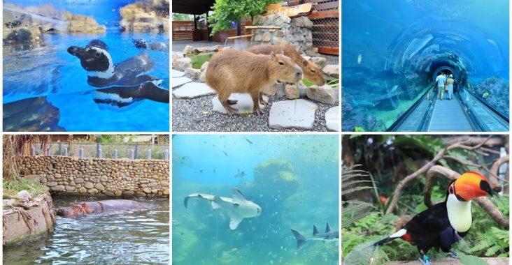 來逛動物園、海洋公園放鬆一下,在家也能看河馬,水豚君就是這麼簡單 @小兔小安*旅遊札記