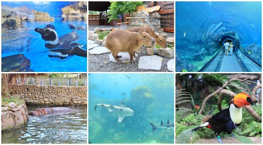 來逛動物園、海洋公園放鬆一下,在家也能看河馬,水豚君就是這麼簡單