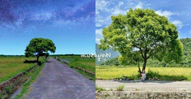 宜蘭景點》I SEE YOU,南澳金城武樹,美拍星空與油綠稻田伯朗大道~ @小兔小安*旅遊札記