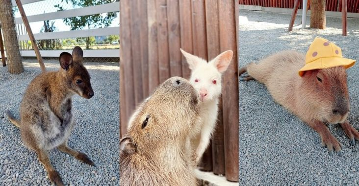 宜蘭新景點》跟可愛小鹿互動!張美阿嬤農場,餵梅花鹿、拔紅蘿蔔超有趣~ @小兔小安*旅遊札記