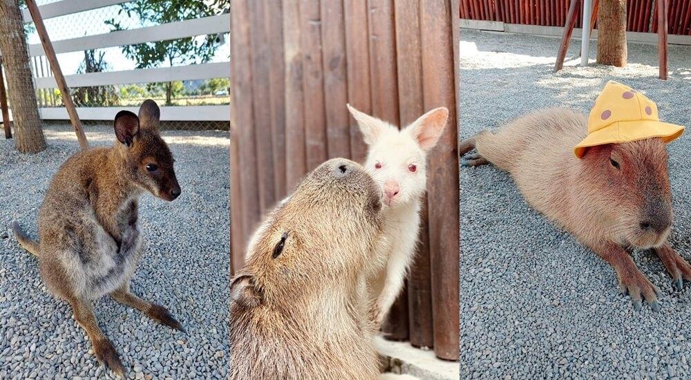 網站近期文章:宜蘭新景點》跟可愛小鹿互動!張美阿嬤農場,餵梅花鹿、拔紅蘿蔔超有趣~