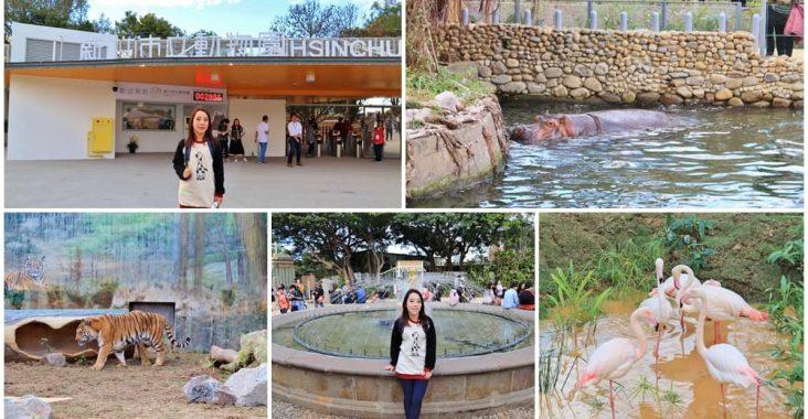 新竹新景點》新竹市立動物園,大嘴河馬樂樂來了,可愛動物明星齊聚一起! @小兔小安*旅遊札記