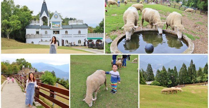 南投景點》清境農場最萌小棉羊群,羊群帶頭草原散步,來找羊咩咩一起奔跑 @小兔小安*旅遊札記