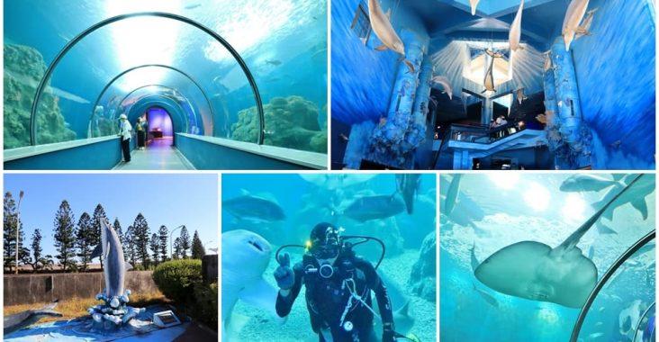 澎湖景點》美麗水下世界!澎湖水族館海底隧道,潛水員餵食秀,可愛水母寶寶都在這~ @小兔小安*旅遊札記