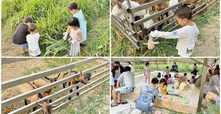 高雄禾光牧場 免門票羊牧場,自己割牧草餵羊,暢玩親子沙坑,還有新鮮羊奶可喝 @小兔小安*旅遊札記
