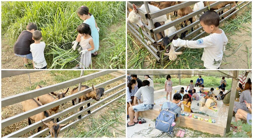 高雄親子景點一日遊二日遊,暢遊農場、免費景點親子郊遊趣