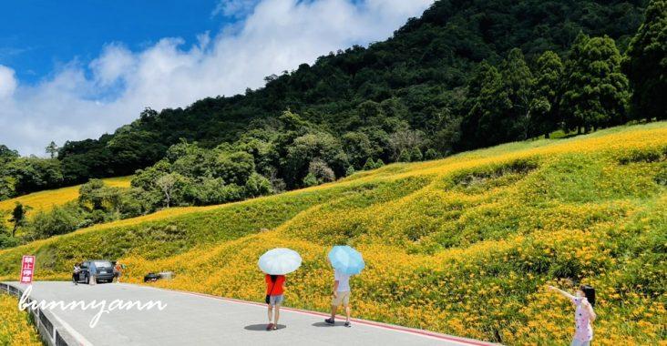 赤柯山小瑞士農場,最新花況分享,金針花季一定熱門的賞花景點 @小兔小安*旅遊札記