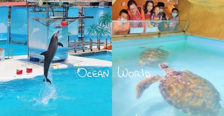 新北》來跟海豚親親!野柳海洋公園洞穴水族館,北部唯一海星觸摸池、真人高空跳水,放假就來這玩! @小兔小安*旅遊札記