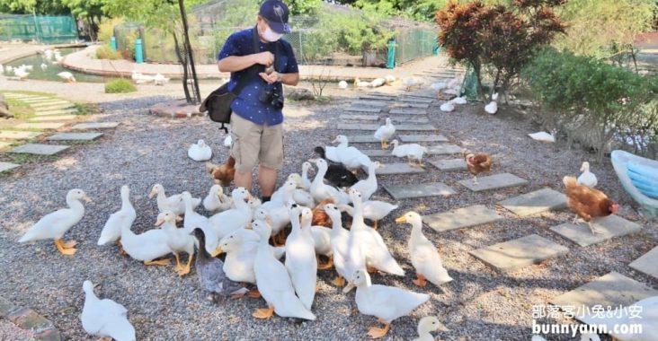 宜蘭鴨寮故事館,只要一百元,體驗撿鴨蛋餵鴨吃飯樂趣 @小兔小安*旅遊札記