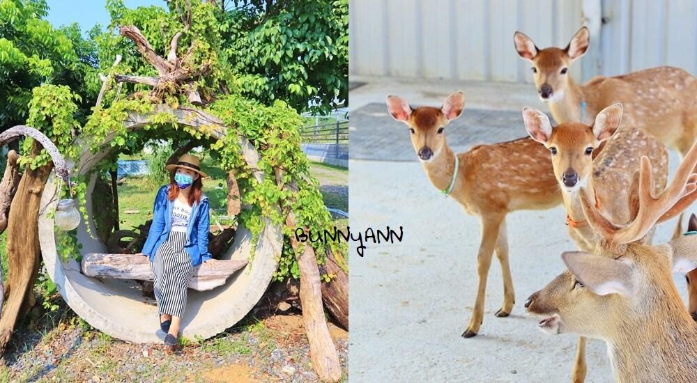 小琉球鹿粼梅花鹿園區,小鹿斑比包圍你,宮崎駿場景打卡去