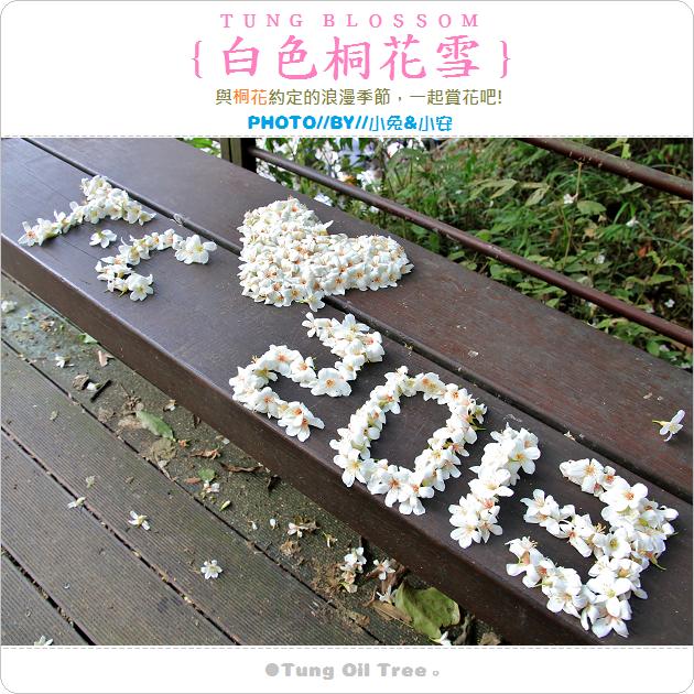 『油桐花』2013土城桐花季,美麗桐花飄飄落。 @小兔小安*旅遊札記