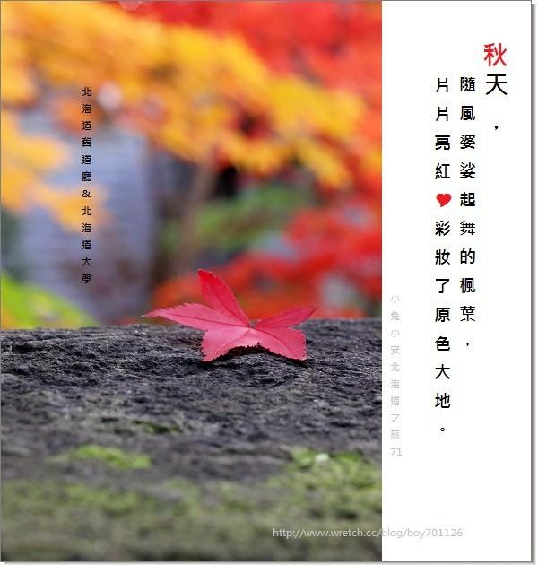 『札幌旅行』探北海道舊道廳紅磚樓,遇見了北大片片楓紅。 @小兔小安*旅遊札記