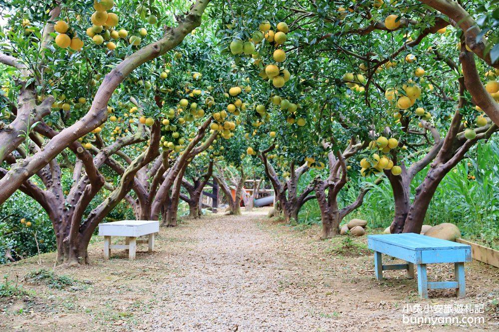 苗栗新景點》頭屋橙香森林,藏在橘子園裡的草地原野!玻璃屋下午茶超放鬆~