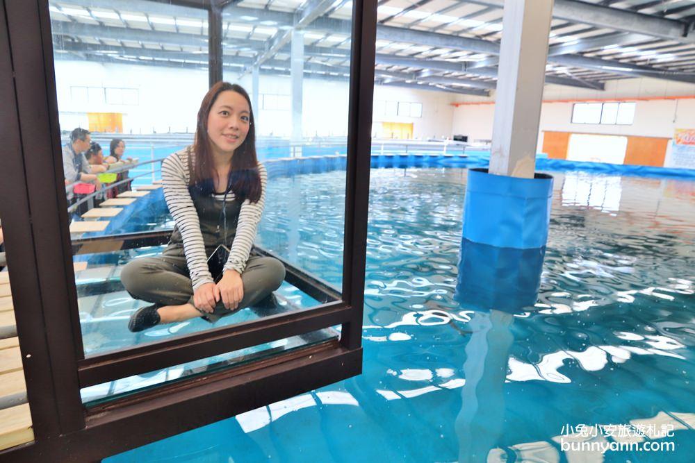 宜蘭景點》金車生技水產養殖研發中心,餵鯊魚吃飯!看鯊魚和魟魚在腳下開心悠游~