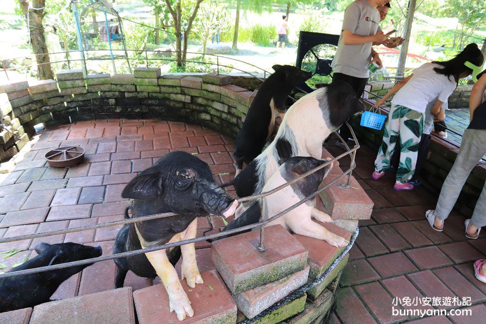 宜蘭景點》宜農牧場,只要50元就能餵豬、餵羊、餵小白兔,宜蘭CP值最高牧羊場!