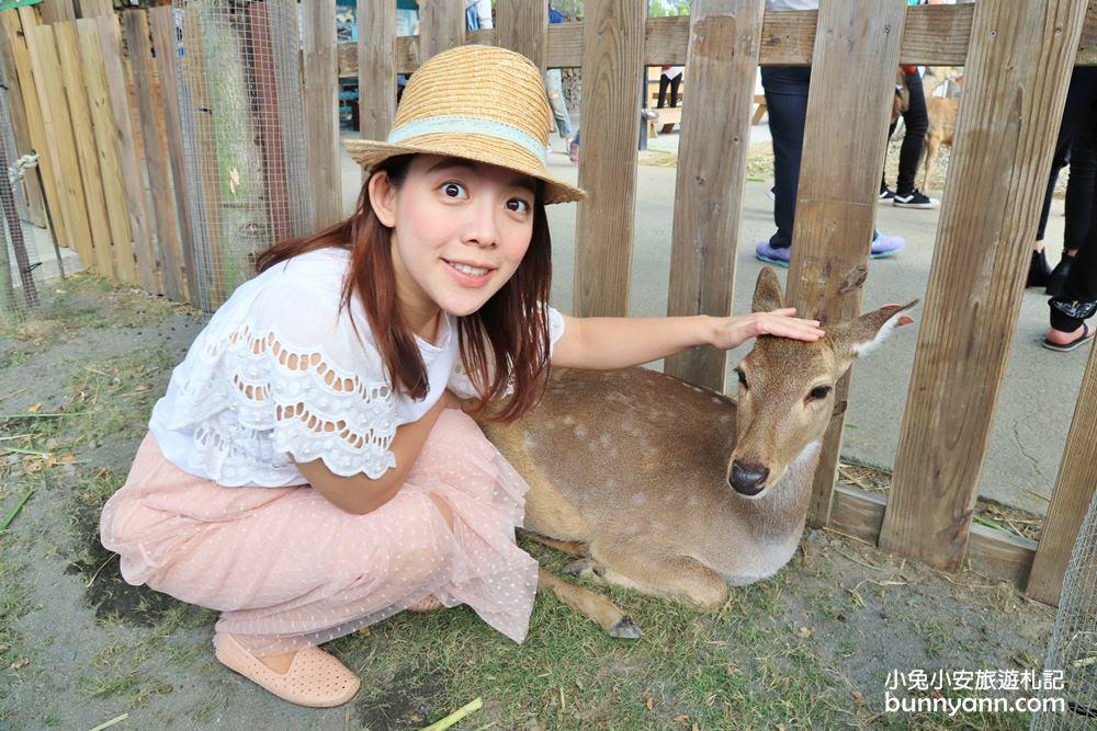 屏東景點》鹿境療癒系小鹿斑比,擁有最多可愛小鹿的農場,還有文青風拍照場景~