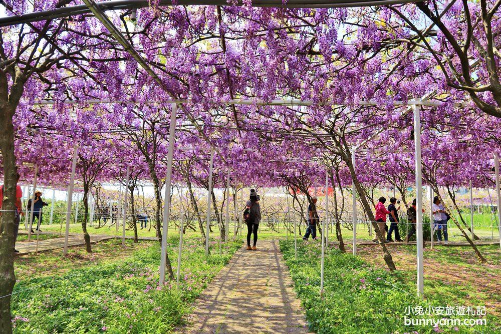 新北景點》季節限定色!淡水紫藤咖啡園屯山園區,浪漫紫藤天空、花廊等你來拍~ @小兔小安*旅遊札記