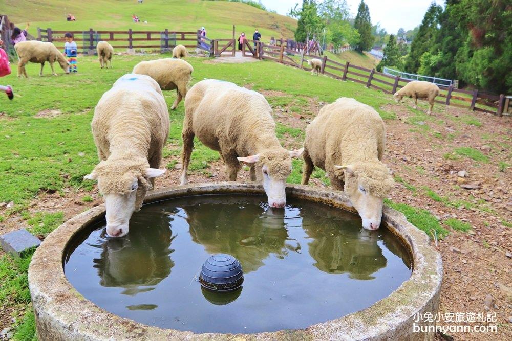 網站近期文章:南投清境農場,最萌小棉羊群草原散步,來找羊咩咩奔跑