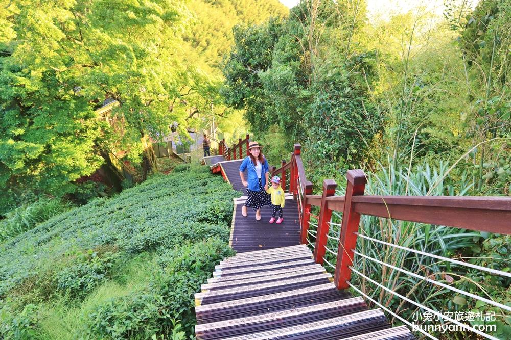 嘉義景點》親民版抹茶山,二尖山步道十分鐘輕鬆賞山嵐美景,茶園風光好美麗~