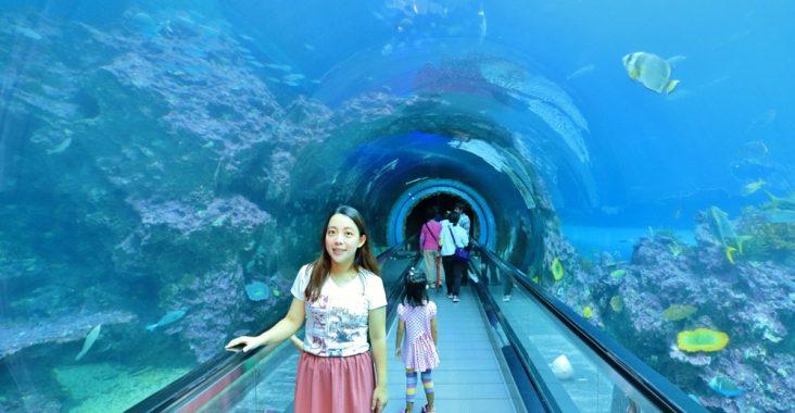 全台》激夯魚類世界!收錄7個唯美水族館,漫步海底隧道、摸海星、餵食秀做好筆記別放過~ @小兔小安*旅遊札記