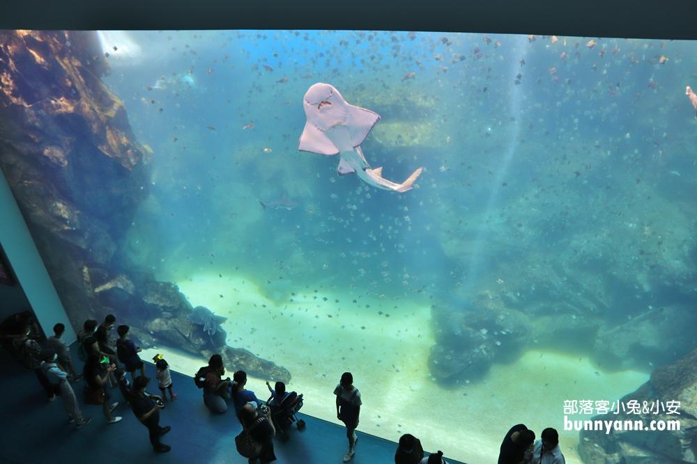 桃園景點》跟企鵝一起吃飯!八景島水族館XPARK水生公園開幕,七大主題展區曝光~