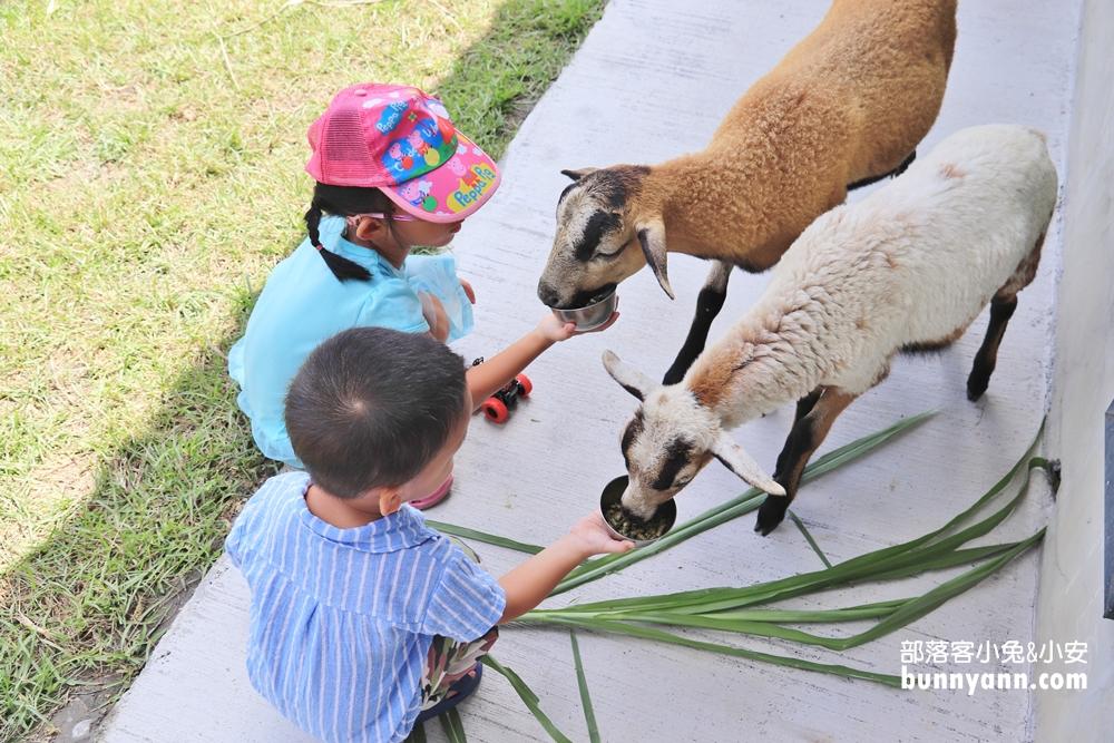 宜蘭新景點》這也太萌了!梅花湖畔小鹿斑比現身!還有可愛羊駝可以互動喔!