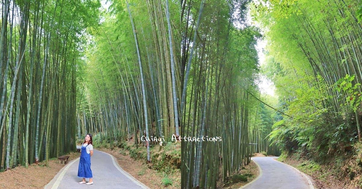 嘉義》好舒適!瑞里綠色隧道,浪漫竹林步道免費拍,美如明信片場景!