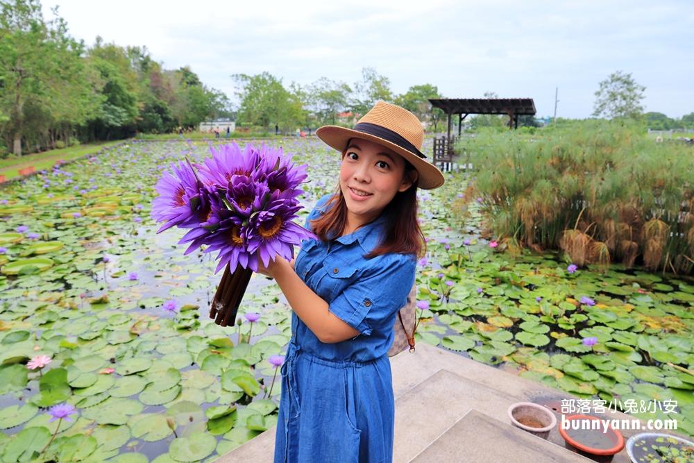 花蓮》免門票拍照!最後秘境蓮城蓮花園,請你喝蓮花茶,唯美蓮花束打卡美一波