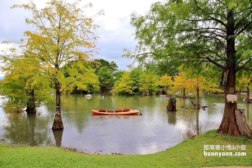 花蓮》季節限定!松湖驛站縮小版三灣落羽松,夢幻水樣森林拍美照