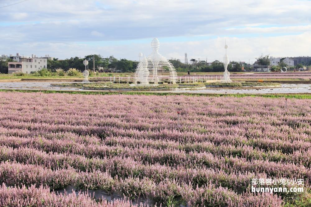 2020桃園仙草花節》楊梅紫色仙草花節,走進南法紫色普羅旺斯遇見幸福~