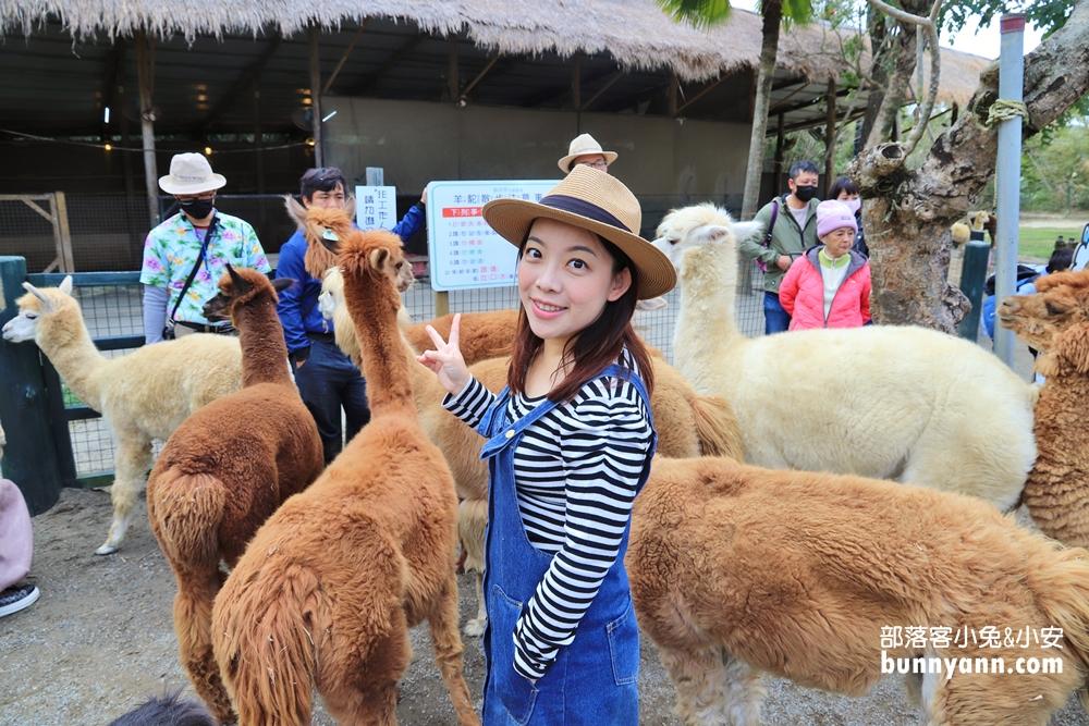新竹》放假來遠足!綠世界生態農場踏青,可愛羊駝與鸚鵡表演好精彩
