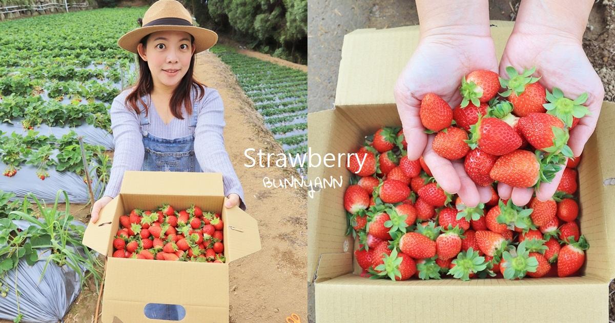 苗栗景點》大湖草莓季,馬拉邦山金鑽草莓園,蘋果草莓好甜! @小兔小安*旅遊札記