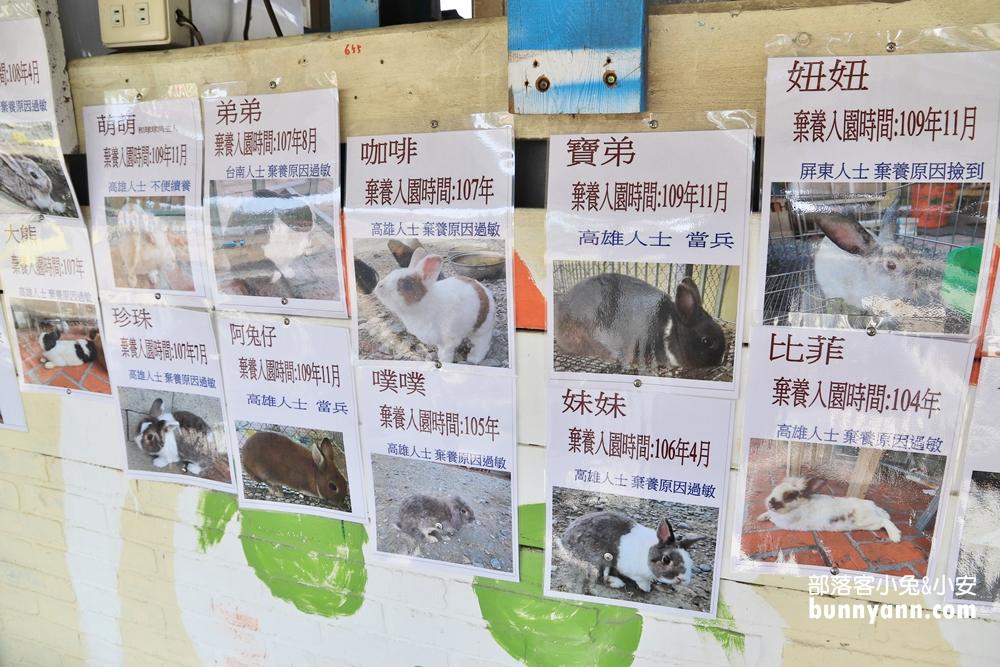 屏東》原來不是天竺鼠!來蕭家大院跟萌兔互動,可愛兔兔陪你一起下午茶