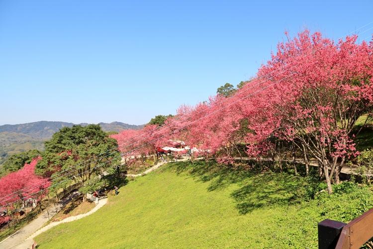 桃園》上山放空!翠墨莊園森林系小旅行,登山步道、鳥居地藏神社,踏青打卡放鬆去