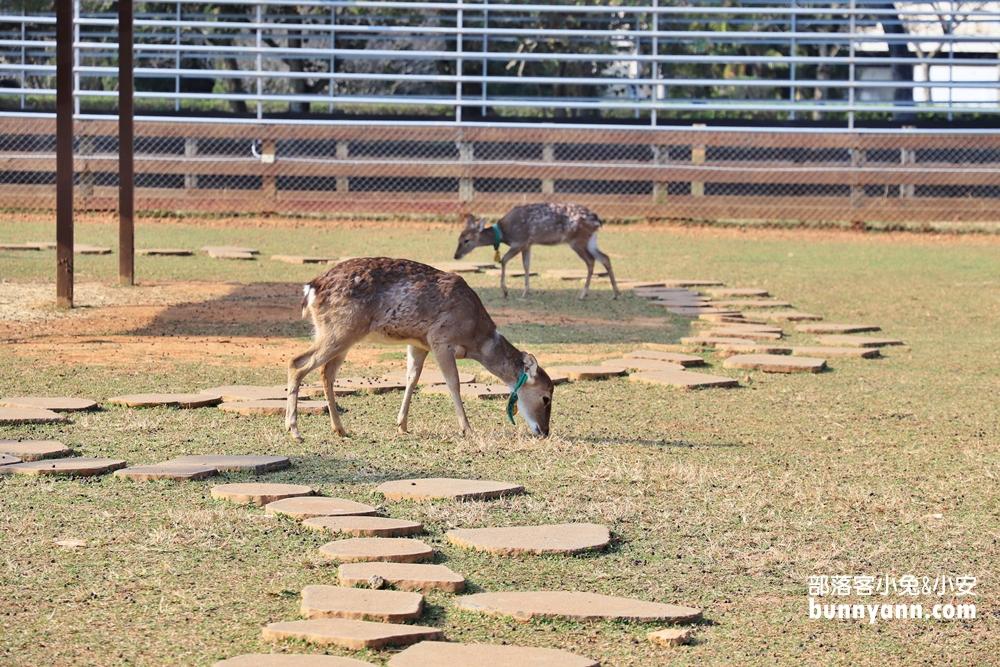 桃園》水豚君不睡覺!埔心牧場可愛動物好療癒,有梅花鹿、羊駝、兔子,戶外踏青去!