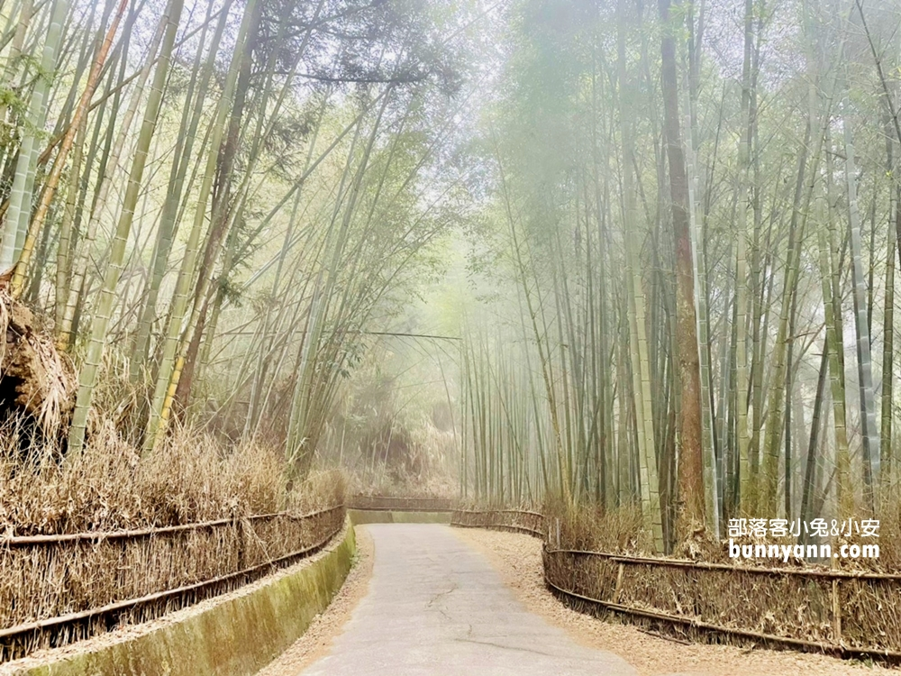 雲林》戶外走走!草嶺五元兩角,台版小京都嵐山竹林,走進美麗竹林隧道