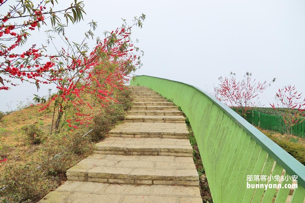 雲林》草嶺茶園秘境!雲嶺之丘景觀平台,5分鐘漫步翠綠茶園,無死角視野超美~