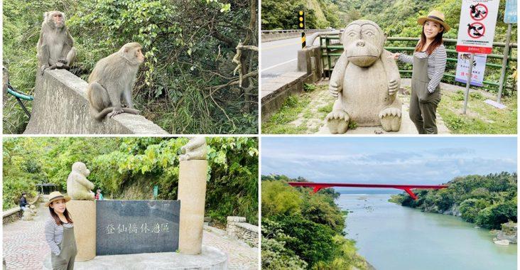 台東》猴子東遊記!泰源幽谷登仙橋,近距離觀察猴子軍團生活,我家也有隻小猴子 @小兔小安*旅遊札記