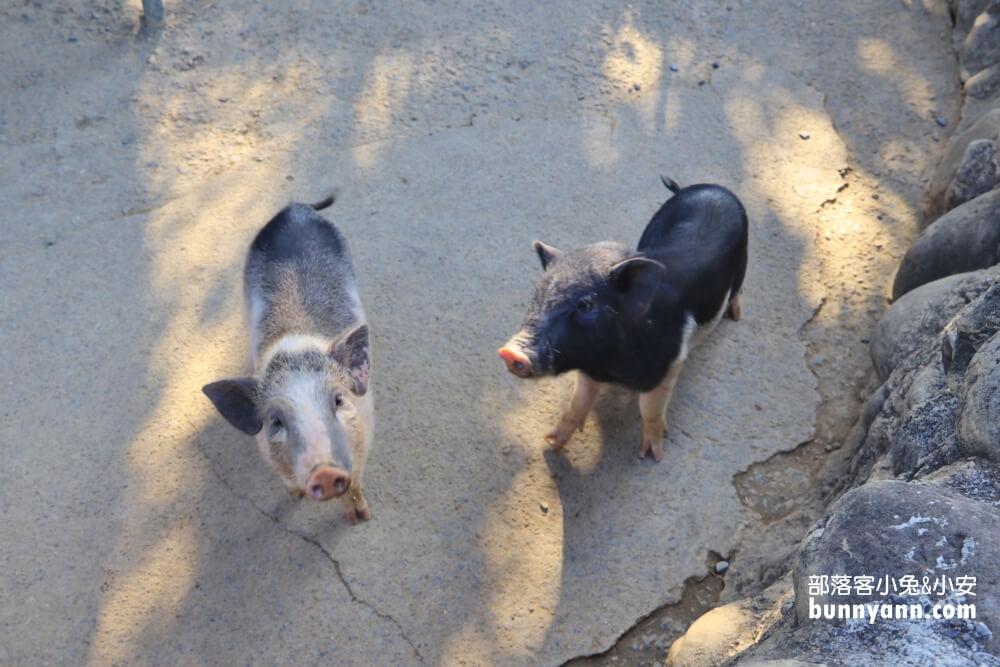 台南》忘憂秘境!遠的要命仙湖農場,無邊際玩水池,親近小動物,擺脫城市喧囂來山裡
