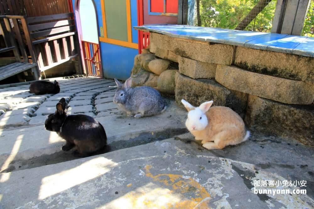 彰化景點》今夜星辰休閒農場,可愛羊駝與兔子群出沒中!