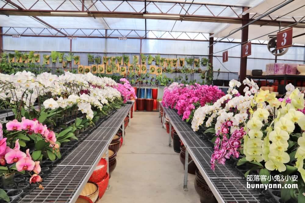 台中景點》萌芳花卉農場,上萬株石斛蘭、蝴蝶蘭綻放中,免門票室內賞花地點