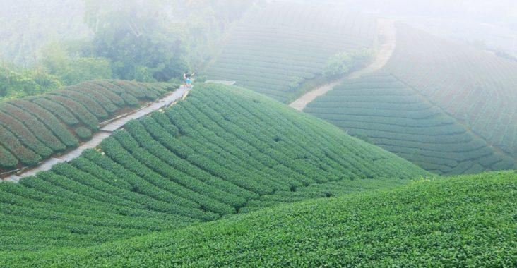 嘉義景點》海鼠山1314景觀平台,5分鐘漫步小清新茶園,無死角視野超美~ @小兔小安*旅遊札記
