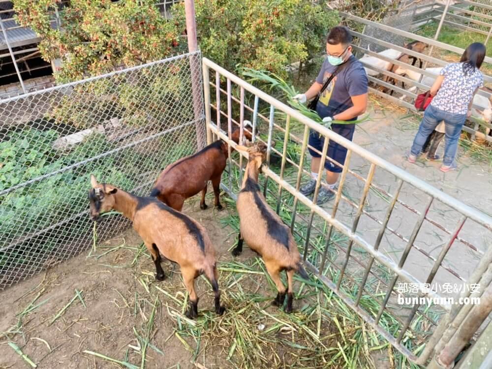 高雄禾光牧場|免門票羊牧場,自己割牧草餵羊,暢玩親子沙坑,還有新鮮羊奶可喝