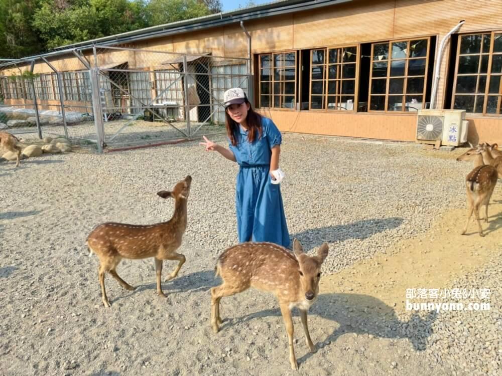 雲林古坑新景點》鹿營親子農場~滑草,玩水,餵小鹿,野餐風,農場戶外放風半日遊