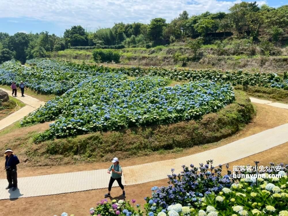 新北繡球花 2021高家繡球花田萬里第三園區,8000坪繽紛繡球花海隨你拍!
