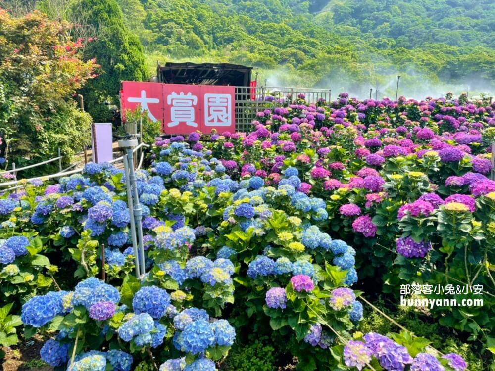 竹子湖繡球花季》大賞園繽紛繡球花田,IG打卡夢幻花海仙氣滿滿~