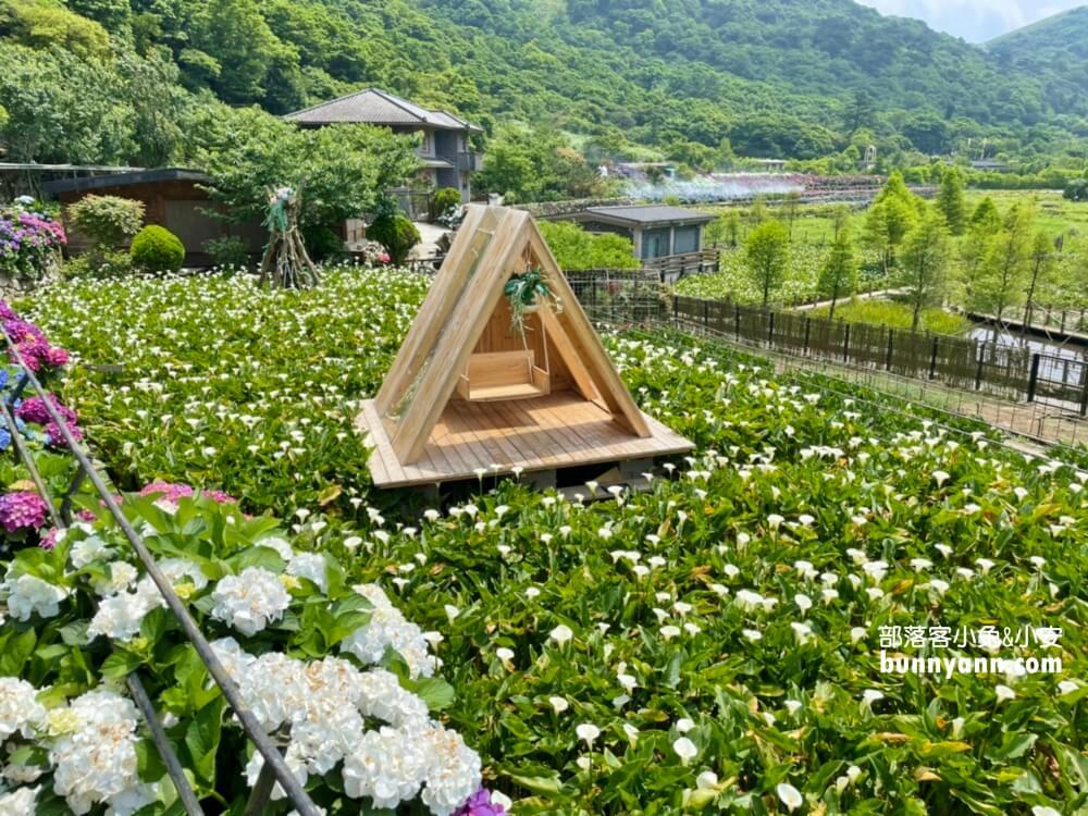 竹子湖繡球花季|名陽匍休閒農莊,美拍繡球花田,海芋小木屋,貼近大自然之旅