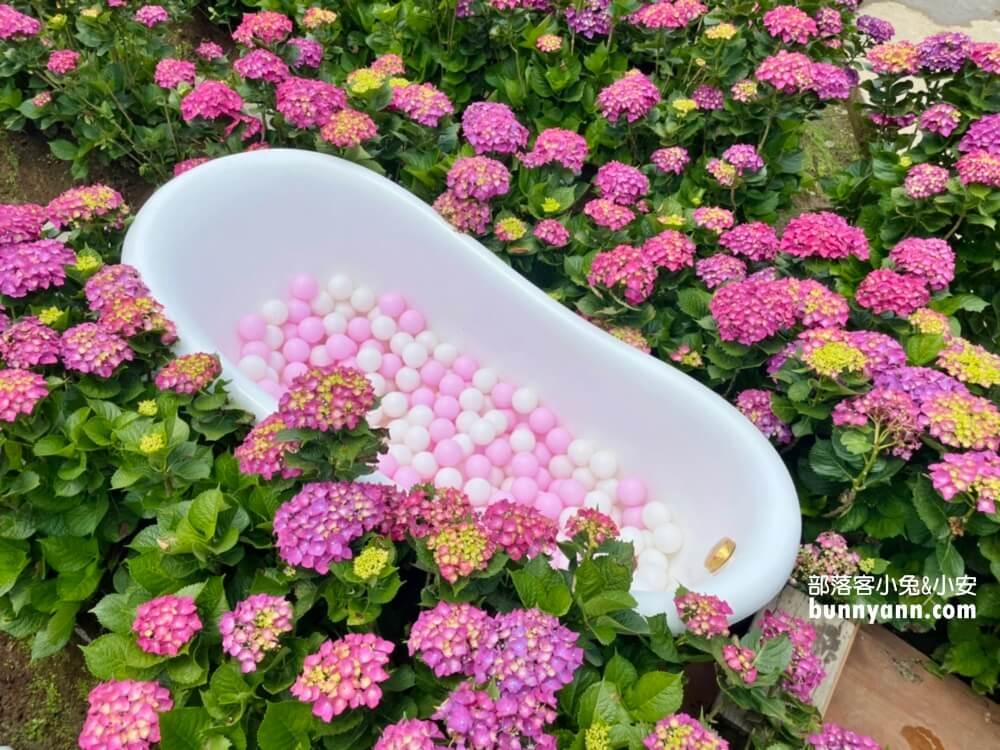 竹子湖繡球花 2021夢幻花谷繡球花最新花況,繽紛幸福花球綻放中