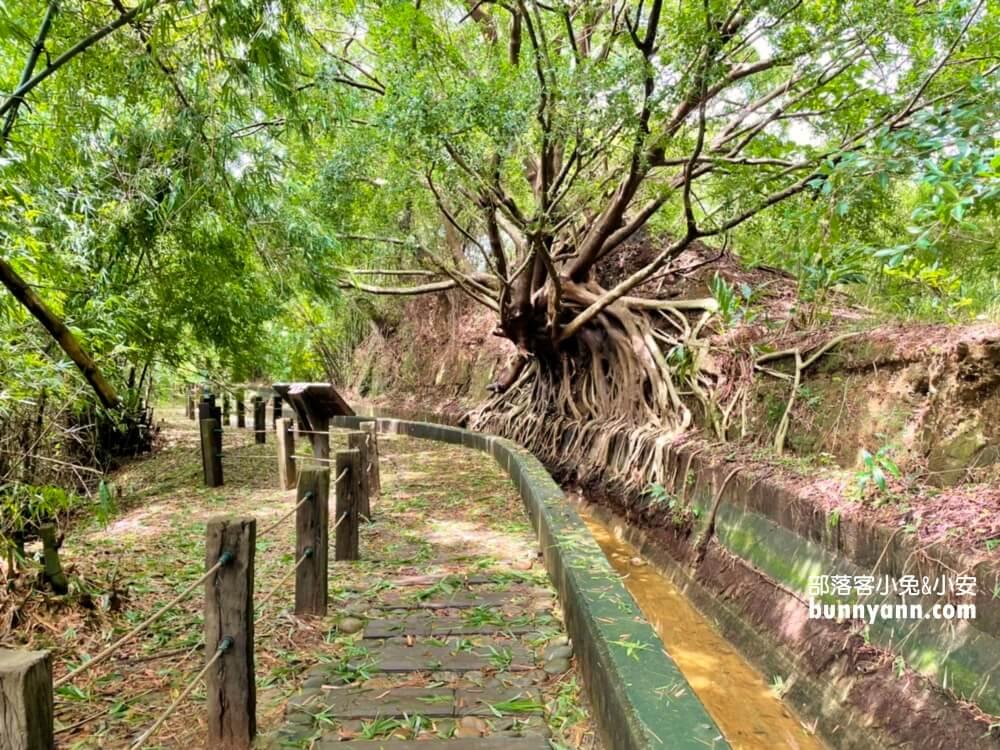台中景點》烏日知高圳步道,漫遊森林水圳步道,登山肉腳也能輕鬆走